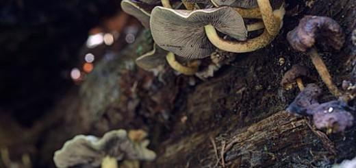 Fungi on Log - Tone Mapped in Photomatix