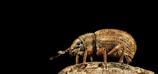 Weevil on log edge