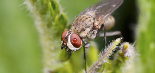 Fly with water on Eye.
