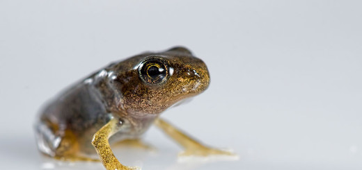 Froglet on whitebox (2)