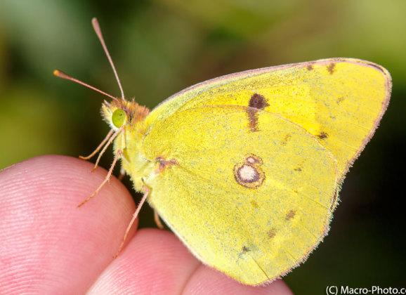Butterflies and a first