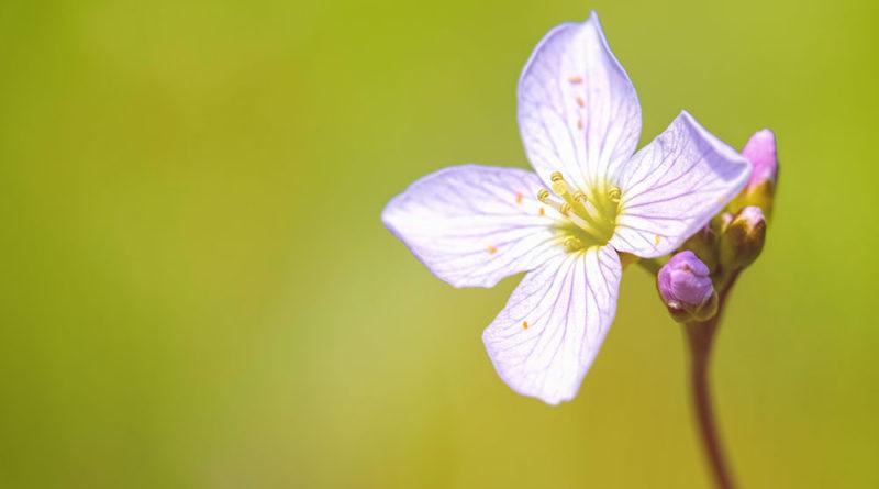 Spring meadow flower