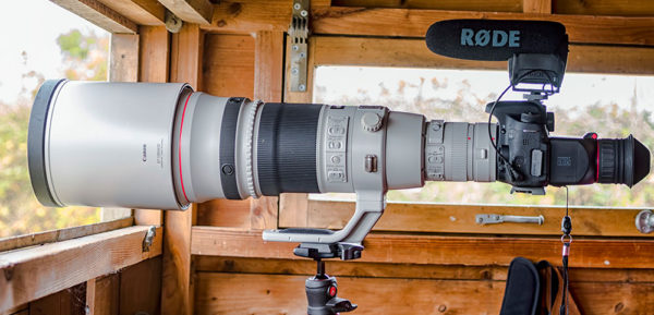 Canon 500mm and RODE Video Mic Pro Setup