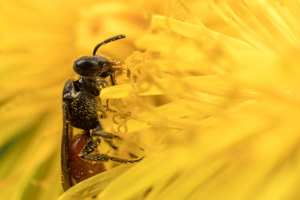 Chewing the Pollen