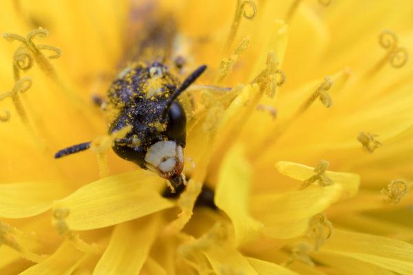 Slurping the nectar